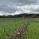 50 Meter Weissdornhecke am Rande des Fuchsackers in Ranspach le Haut 2021