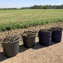 Kleingeschnittenes Totholz schichte ich um die jungen Heckenpflanzen als Wind- und Verdunstungsschutz und Schutz vor mechanischer Beschädigung (z.B. durch Mähmaschinen)