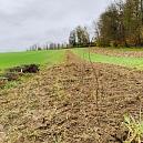 Im Herbst 2020 sieht die frisch gepflanzte Hecke auf der Fuchswiese noch unscheinbar aus