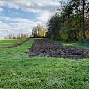 Fuchswiese: Umwandlung einer gedüngten & artenarmen Fettwiese in eine artenreiche Blühwiese - Extensivierung einer Mähwiese