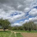 Streuobstwiesen - Vivent les vergers