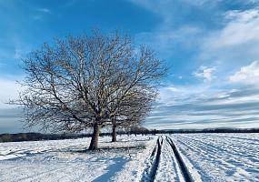 in Planung: Pflanzung von Einzelbäumen als markante Landschaftselemente